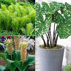 VanZyverden Color Your Garden Monochromatic Collection 9pc Bulb Set