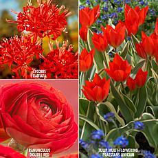 VanZyverden Color Your Garden Red Collection 43-piece Bulb Set