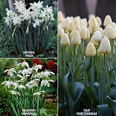 VanZyverden Color Your Garden White Collection 49-piece Bulb Set
