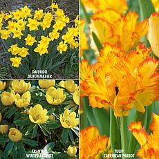 VanZyverden Color Your Garden Yellow Collection 73-piece Bulb Set