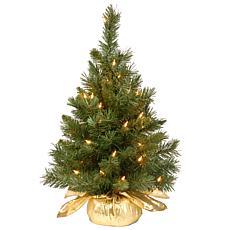 Winter Lane 2' Majestic Fir Tree w/Lights - Gold