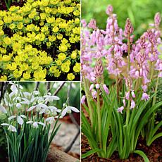 Woodland Plant Collection Set of 25 Bulbs