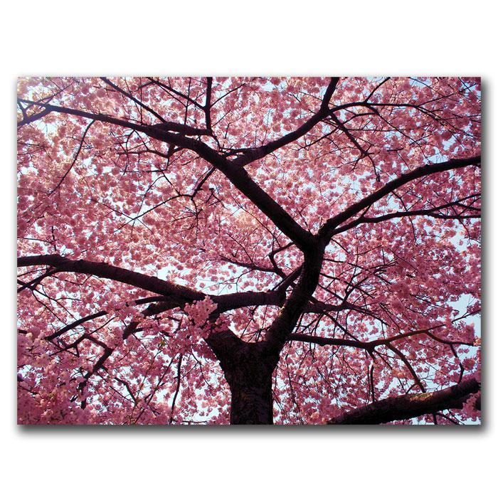 "CATeyes ""Cherry Tree"" Canvas Art - 26"" x 32"""