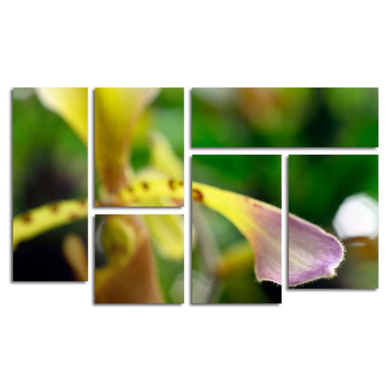 "Kurt Shaffer ""To Touch an Orchid"" Art Collection"