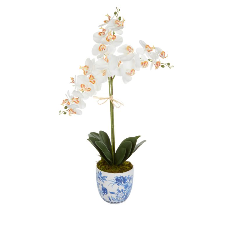 """Patricia Altschul 32"""" Orchid in Blue and White Vase"""